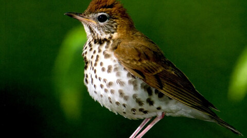 Adult Ministry - May 2019 Lunch & Learn - Endangered Birds of the Midwest