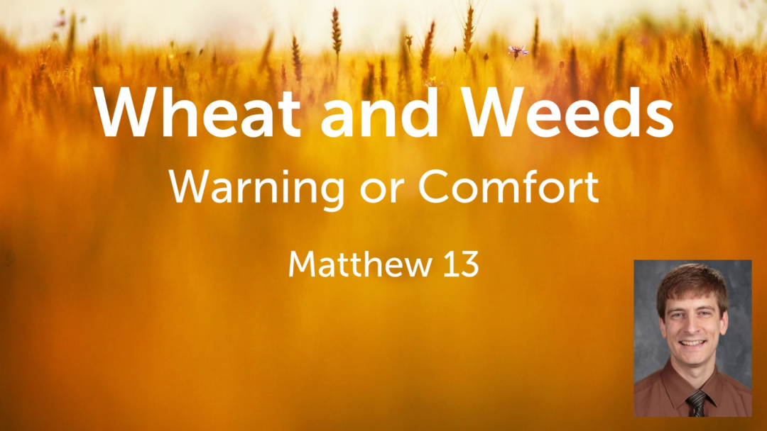 Wheat and Weeds: Warning or Comfort?
